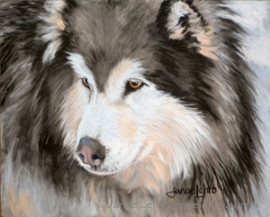 Woolly Malamute