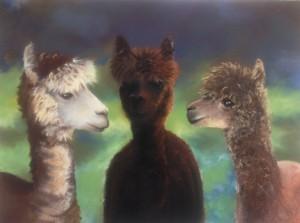 """Three Alpacas"" by Janae Lehto"