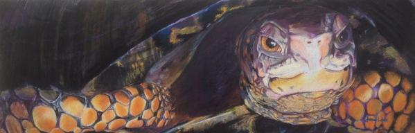 """Boxed In"" Box Turtle by Janae Lehto"